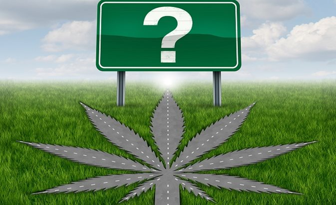 Cannabis plant styled as a roadway leading to a green sign with a question mark